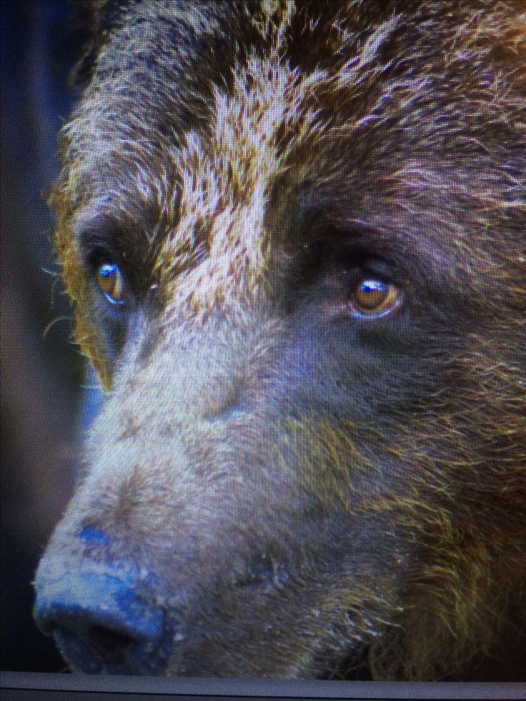 Karhun katse!