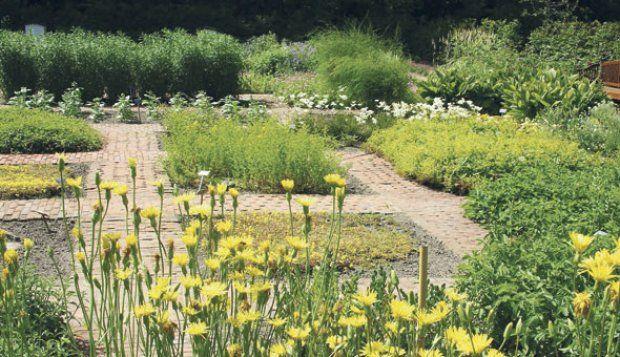 Landet har mange smukke haver med læge- og krydderurter, der står klar til en sommerudflugt. Her er det haven ved Spøttrup borg i Salling. D...