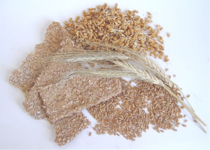 Raw wheat - InfoBarrel Images