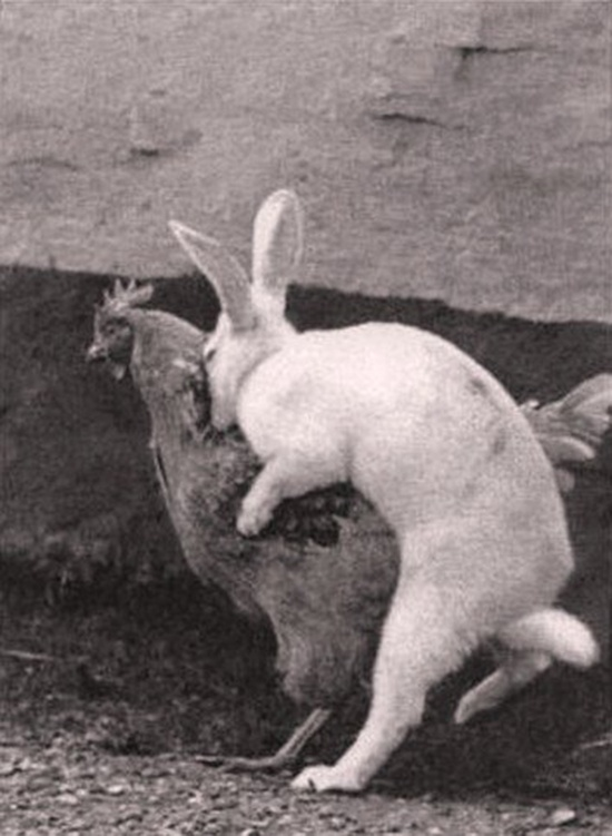 Where Easter eggs really come from...