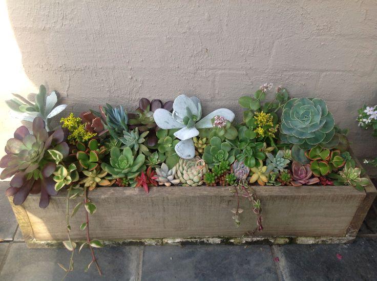Succulents in a box