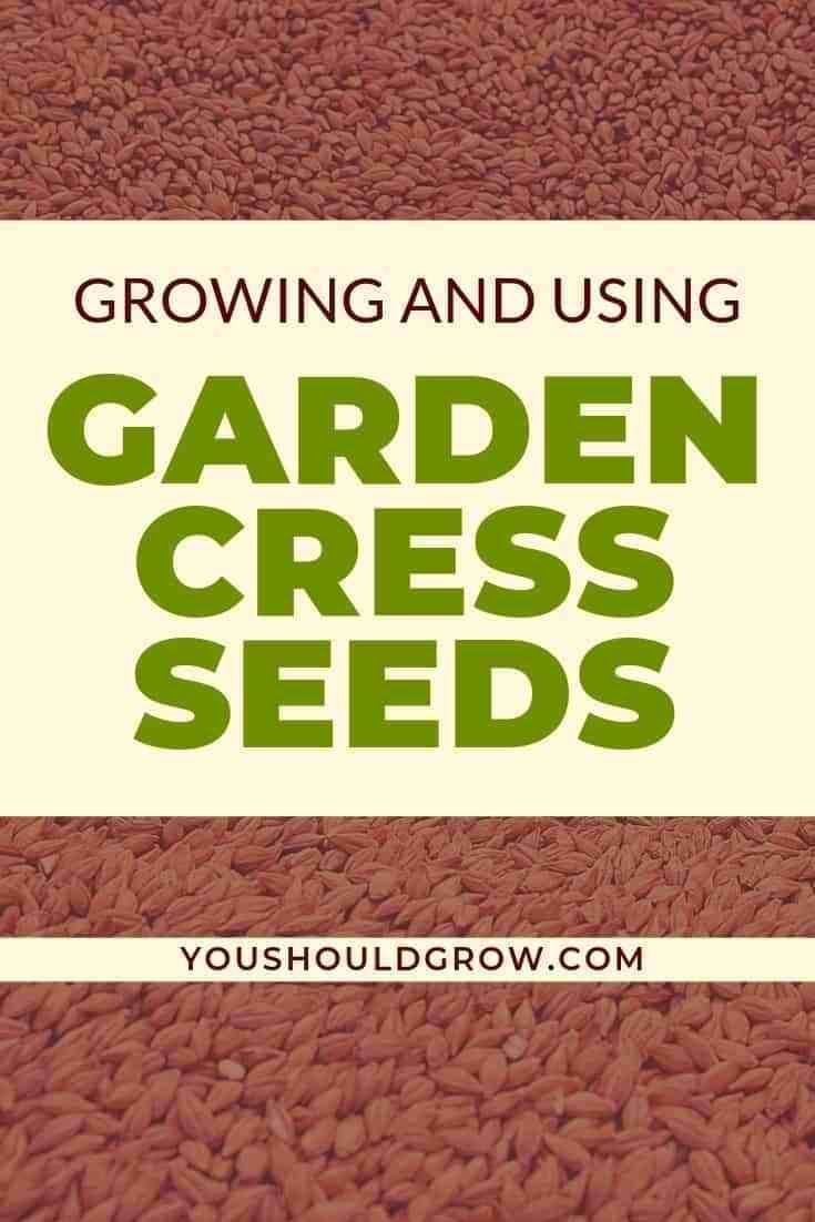 Have You Tried Growing Or Eating Garden Cress Seeds Organic