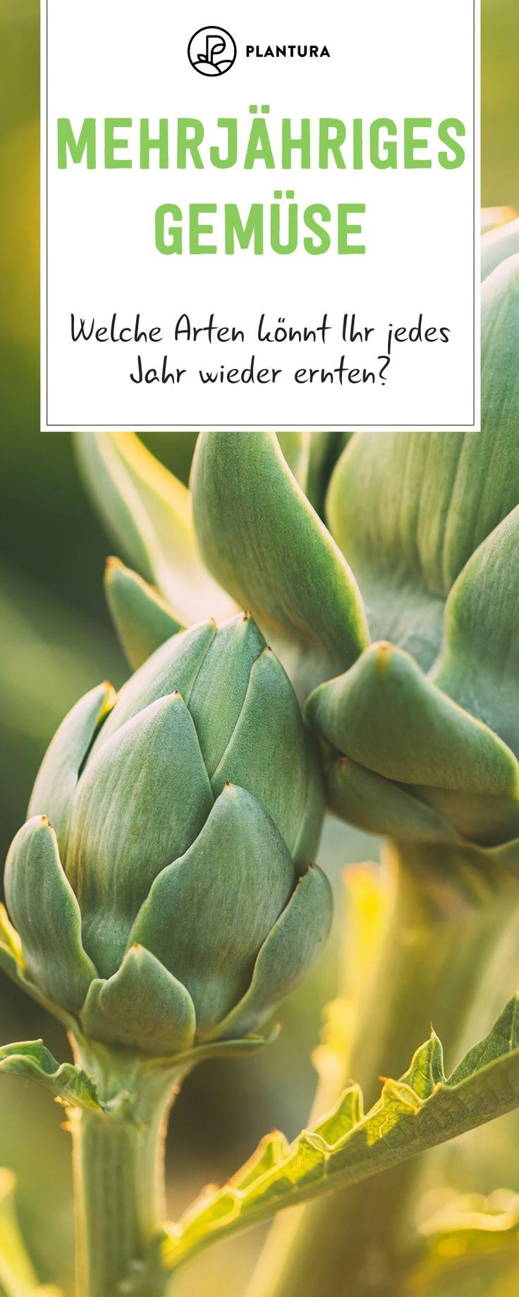 Mehrjähriges Gemüse: Die 10 besten Arten – Plantura | Garten Ideen & Tipps | Gemüse, Obst, Kräuter