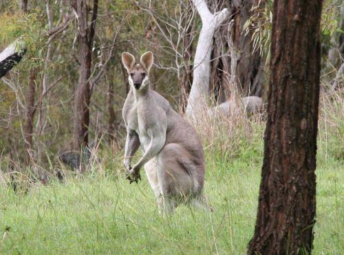 Australien Ranch ideal für Auswanderer