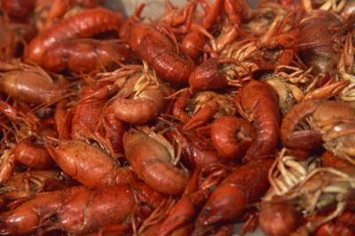 How to Breed Crawdads