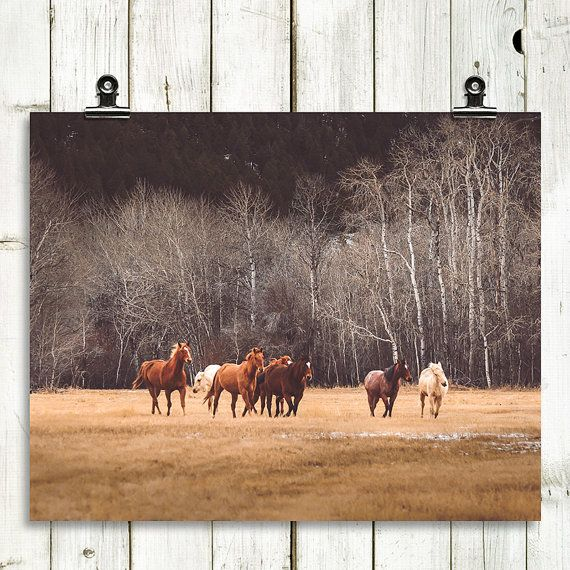 horses horse photography landscape photography by MTPhotoJournal (Art & Collectibles, Photography, Color, home decor rustic, home decor wall art, large wall art, landscape photos, colorful wall art, colorful art, country home decor, horses, horse photography, nature prints, nature wall art, earth tones, home decor art print)