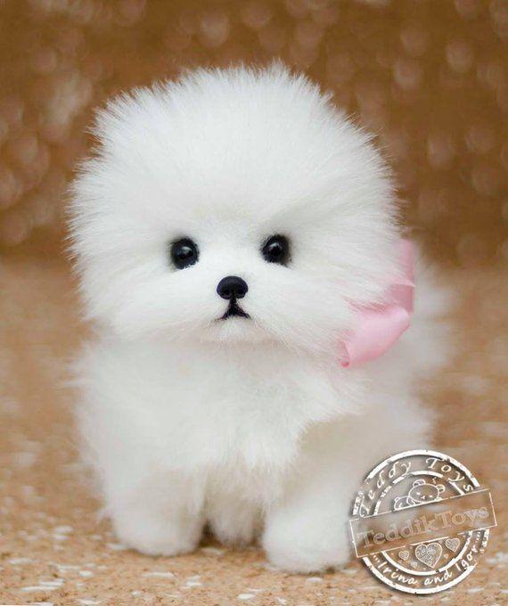 Puppy Lottie Made To Order Teddy Dog Teddy Toy Little Spitz Pomeranian Dog Plush Dog Pomeranianaes Teddy Dog Toy Pomeranian Puppies Cute Small Dogs