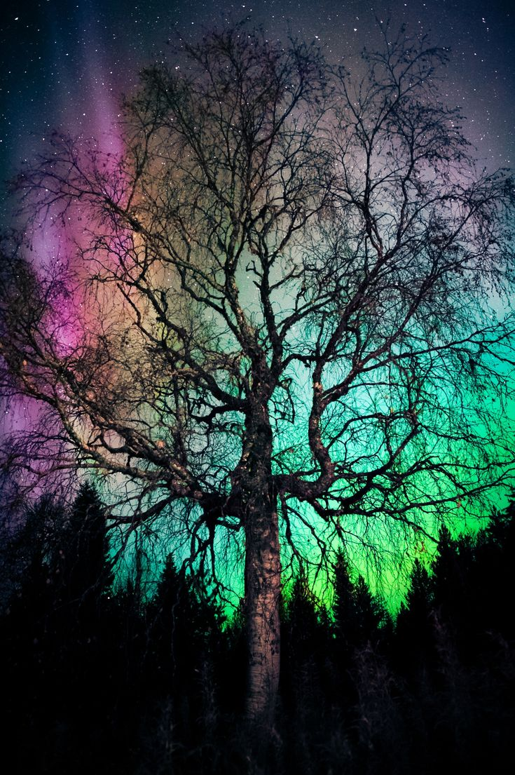 """Aurora Treealis"" ...  tree, aurora and stars l by Ilkka Hämäläinen on 500px"