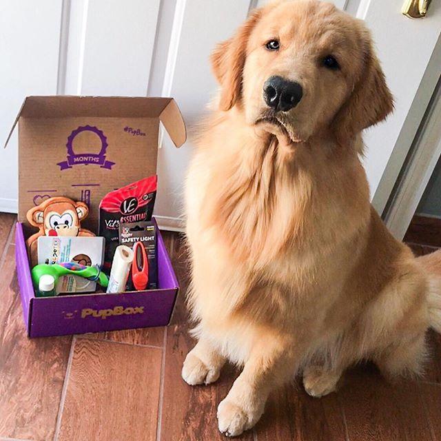 Tucker The Golden Retriever Tuckerbudzyn Instagram Photos And Videos Golden Retriever Retriever Animals