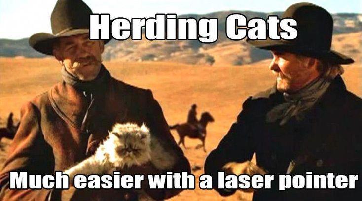 Can Cats Drink Milk Gocats HowToTrainCats Crazy cats