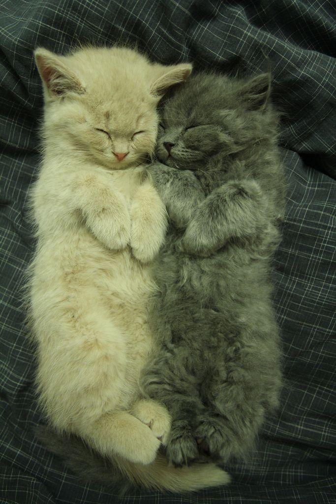How cute are these sleeping kittens.