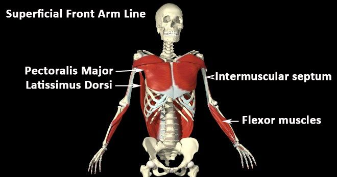 12 best Anatomy images on Pinterest | Massage therapy, Physiology ...