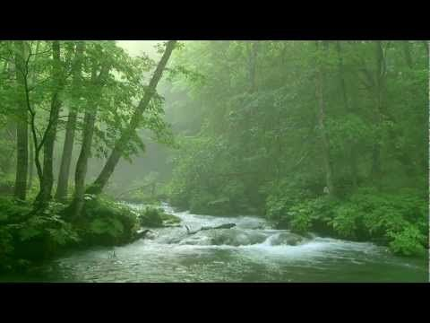 """""""Meditation Deep Relaxing in Forest"""" VIDEO"""