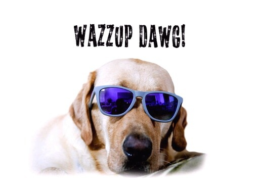 Wazzup Dawg Dogs Pinterest