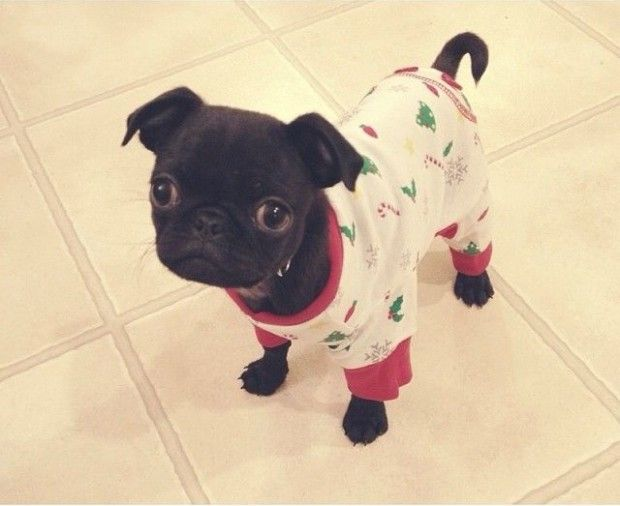 13 Adorable Cats And Dogs Wearing Onesies
