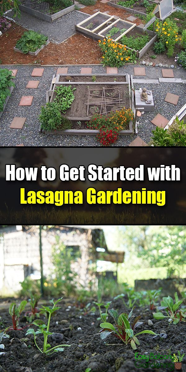 How To Get Started With Lasagna Gardening Home Vegetable Garden