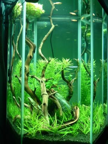 30 gal. Hex - Aquascaping - Aquatic Plant Central