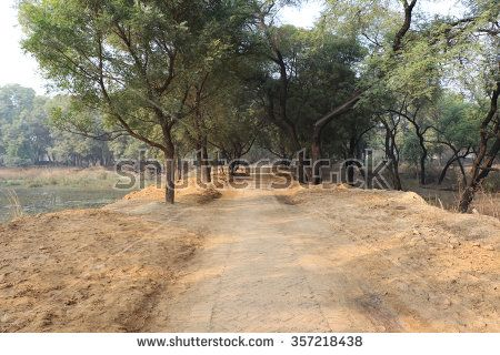 Gurgaon, India â?? January 2, 2016: Tree surrounded way in Sultanpur National Park near Gurgaon, Hariana; a habitat to migratory birds. Visitors regularly visit here to see the migratory birds. - stock photo