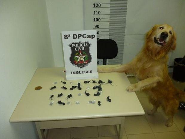 Cão farejador MARLEY encontra maconha em SC (via @donafernanda)