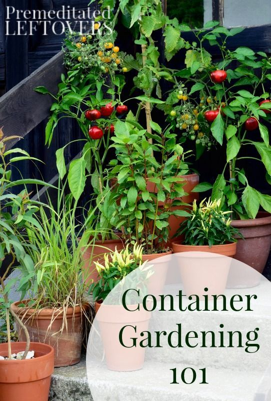 Container Gardening Are you new to container gardening? Here are some  helpful tips, tricks, and ideas to make your container garden a success!