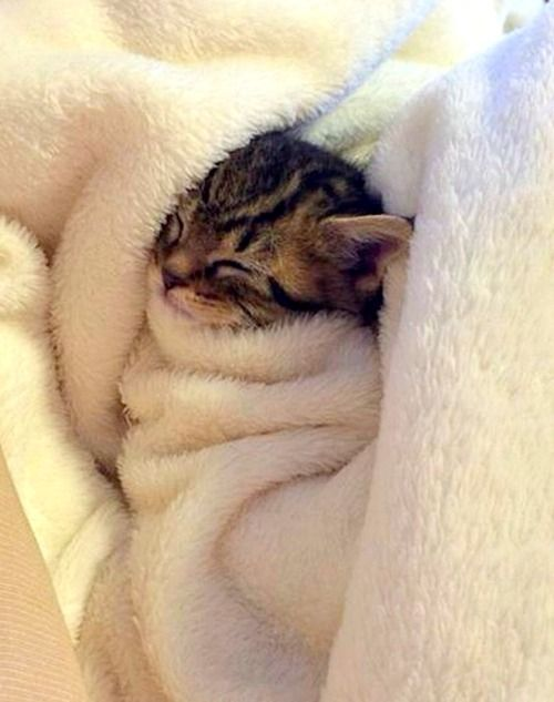 All snuggled in bed ✿⊱╮