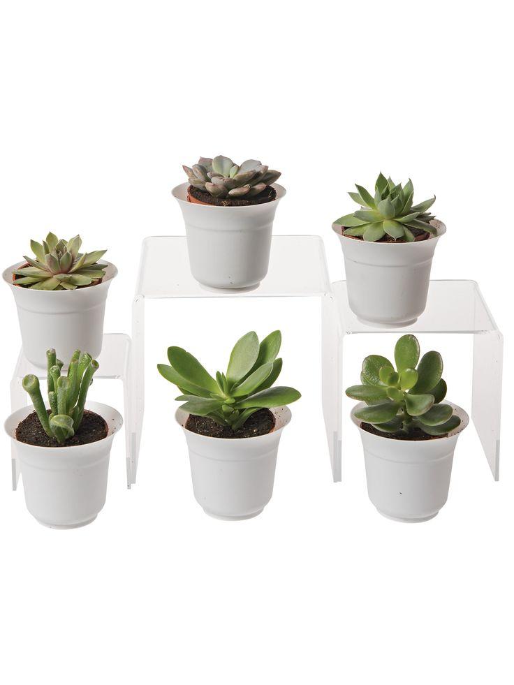 Succulent Terrarium Plant Collection, Set of 6