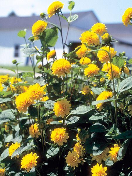 Shade Garden Beds Perennials