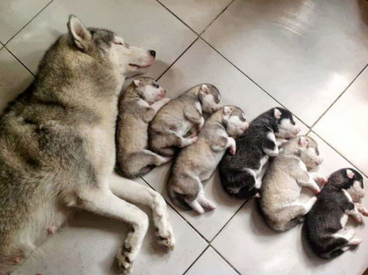 16 dog families that truly define togetherness | Awesomelycute - Cute Kittens, Cute Puppies, Cute Animals, Cute Babies and Cute Things in General
