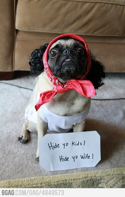 Hide yo kids, hide yo wife! Dog costume.