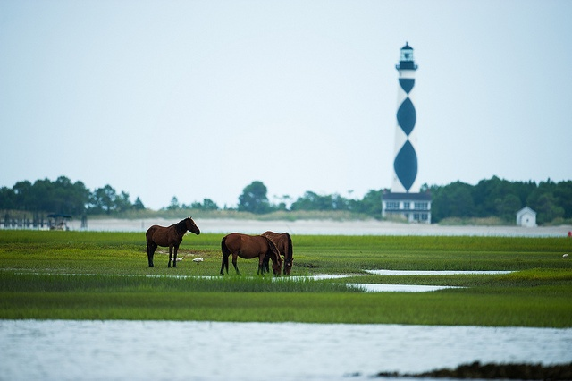 The Crystal Coast's World Famous Wild Horses and Lighthouse at Cape Lookout by crystalcoastflickr