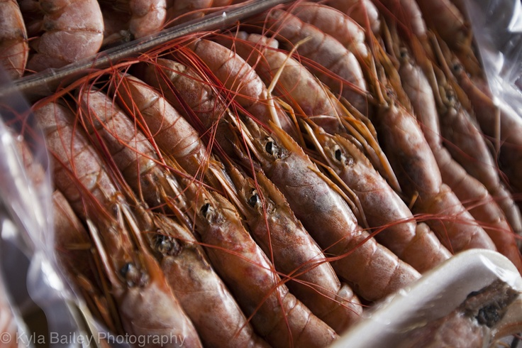 Massive fresh shrimp for sale in the fish market. Puerto Montt, Chile.