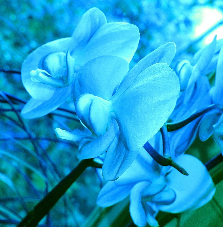 Dark Blue Flowe...