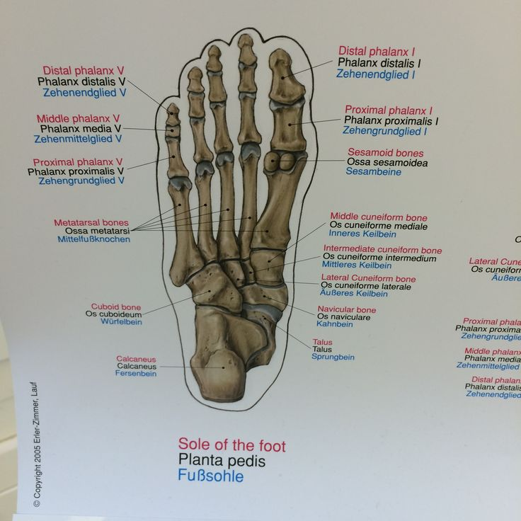 75 best Anatomy images on Pinterest | Anatomie, Menschliche anatomie ...