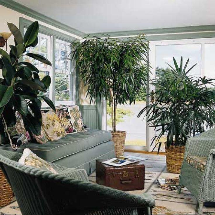 Φυτά εσωτερικού χώρου: Θετική αύρα και καθαρή ατμόσφαιρα - My Beautiful Body | mybeautifulbody.gr | Συμπληρώματα Διατροφής, Προϊόντα Φυσικής Διατροφής, Τόνωση, Αδυνάτισμα
