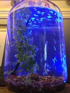 34 best images about aquariumdale on pinterest aquarium for Best wine with fish