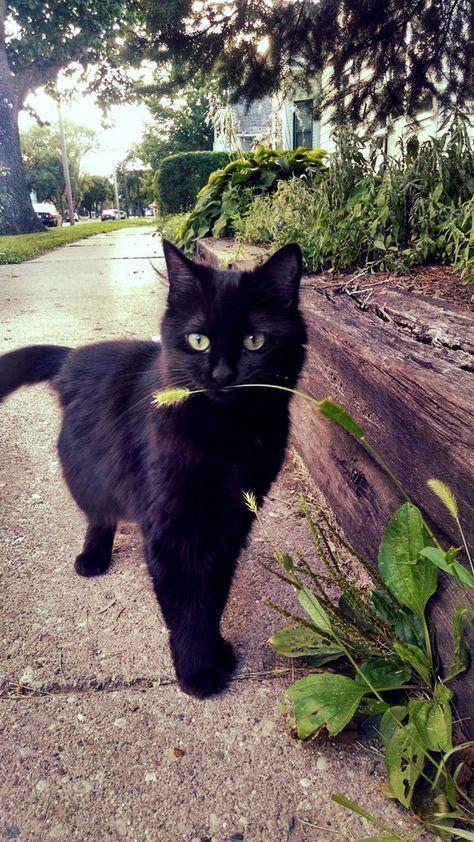 sweet black kitty