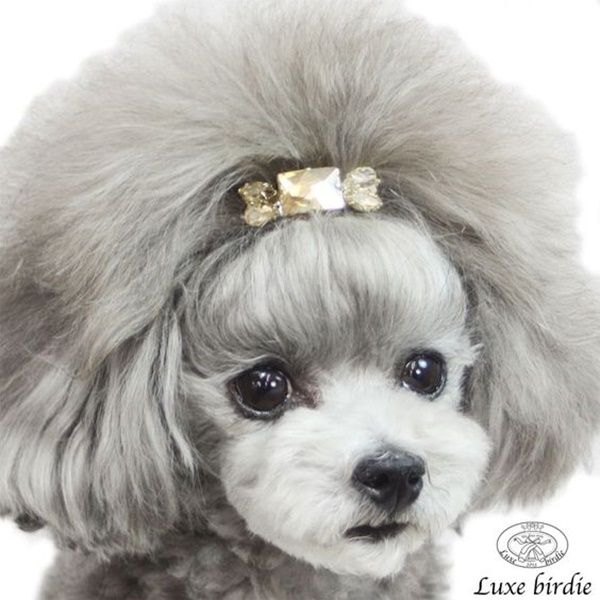 The 25 Best Dog Grooming Styles Ideas On Pinterest