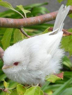 WHITE ANIMALS (some say albino) – Albinos