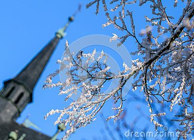 Winter background.White hoarfrost on the branches against the blue sky.