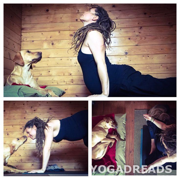 The lovely Lacey helping with my Ashtanga self practice #Pregnancy yoga #yoga pets #ashtanga