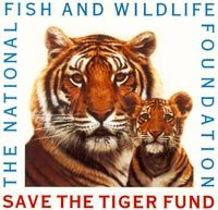 best endangered tigers ideas why are tigers save the tiger fund