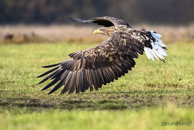 Дикие птицы:Место человека в мире природы