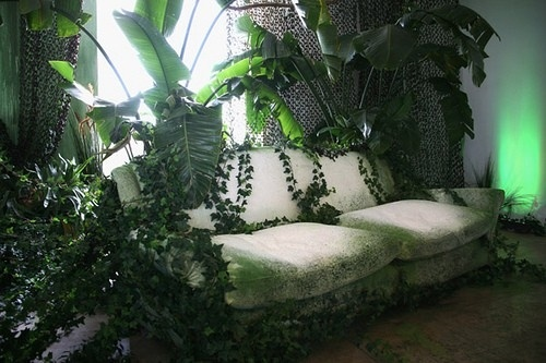 1000  images about jungle room on pinterest