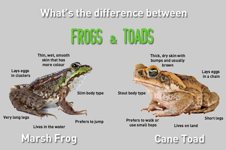 Frogs And Toads Lessons Tes Teach