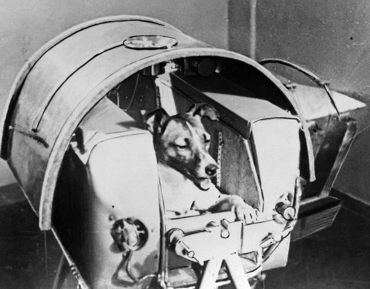 The way it was: Today in history First dog in space.