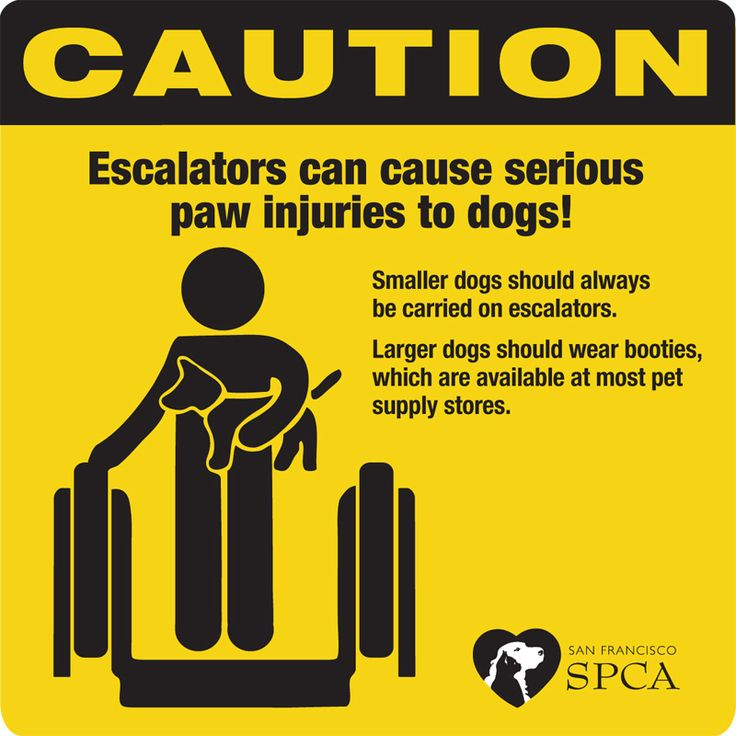 Protecting Your Dog's Paws on an Escalator