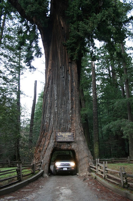 30 best Chandelier Tree images on Pinterest | Chandeliers ...