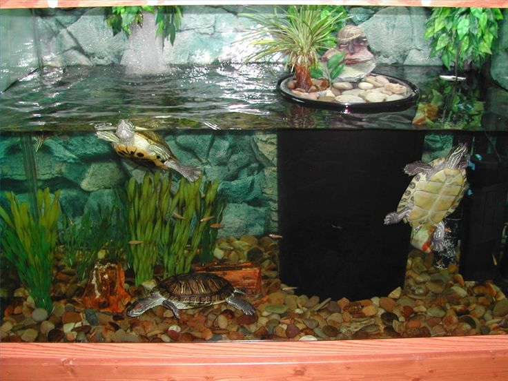 How to Keep Turtle Tanks Clear | eHow