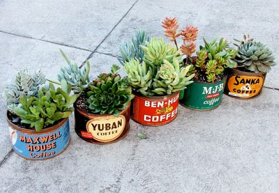 Succulents in circle vintage pots