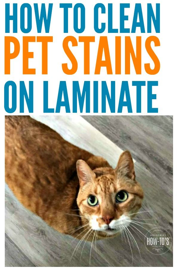 How To Clean Pet Stains On Laminate Floors Are Mine The Only Pets That Make Messes Only When I Am Asleep These Tips Pet Stains Clean Pet Cleaning Pet Urine